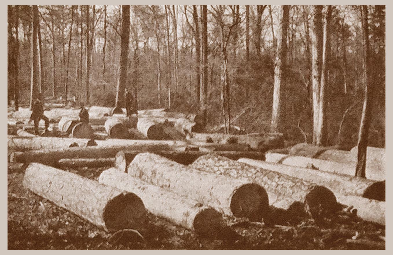 Logs (1909)