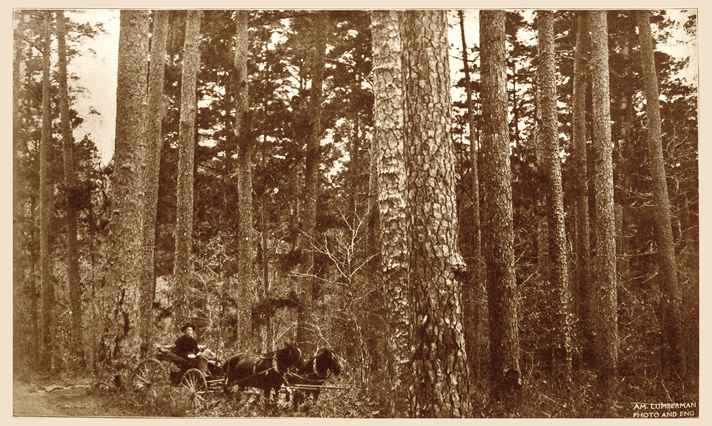 Horse Buggy in Shortleaf Pine (1909)