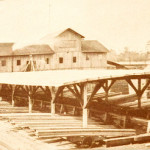 Hodge Sawmill and sorting shed. (1909)