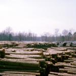 Plywood Plant Log Yard 4