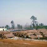 Plywood Plant Log Yard 5