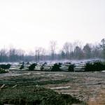 Plywood Plant Log Yard 6