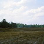 Site Work 5