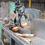 Debarked logs leaving debarker, entering chipper