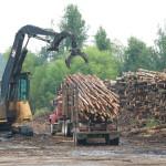 Logs entering mill