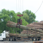 Logs unloaded from truck onto stacks