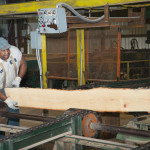 Man flips unfinished board at infeed to board edger