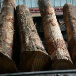Log segments