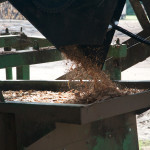 Wood chips to be sent to paper mill