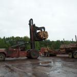 Forklift unloading logs